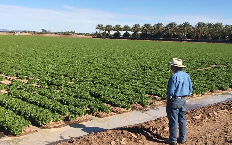 Dr. Sanchez overlooks an irrigated field in Yuma, AZ