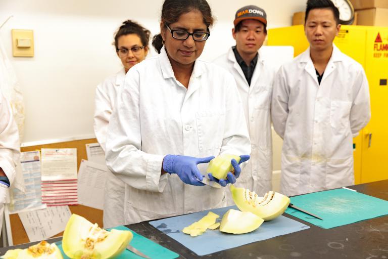 Dr. Ravishankar, University of Arizona, prepares a melon for lab analysis