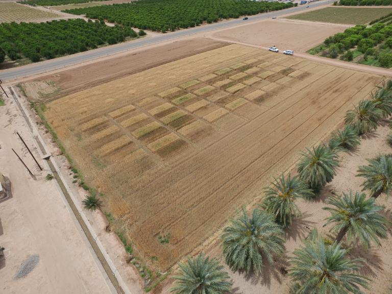 Yuma Mesa field trial site