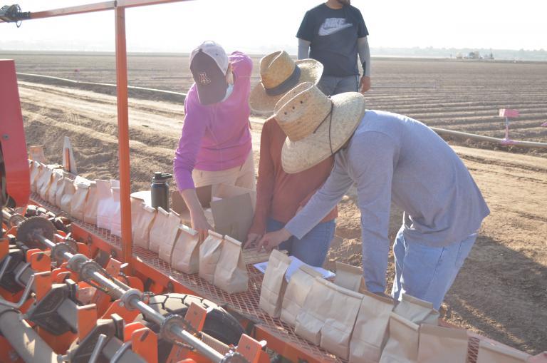 Yuma field trial planting day