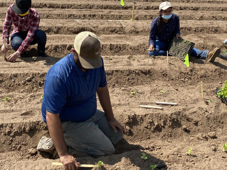 Planting the Wellton trial