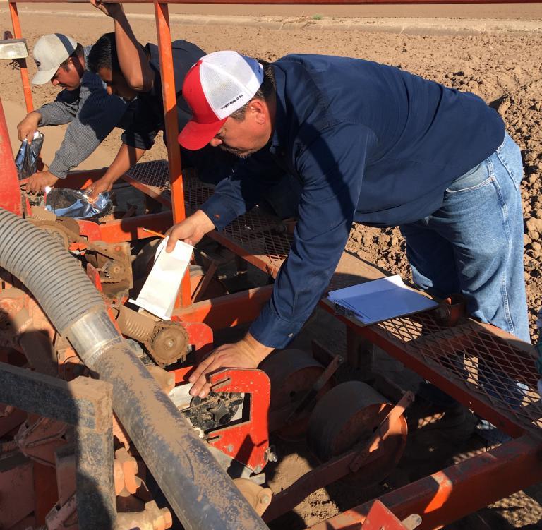 2017 Fusarium wilt field trial